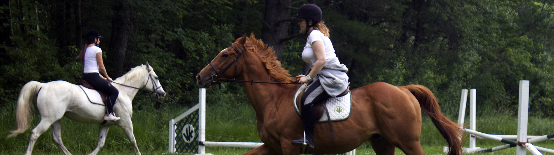 If you love Horses and Horse Riding, this is the perfect summer job for you!