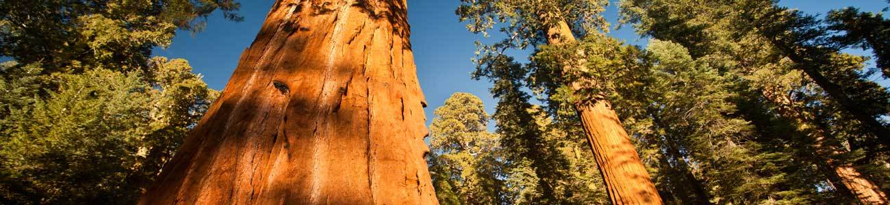 Visit one of America's National Parks after Summer Camp.